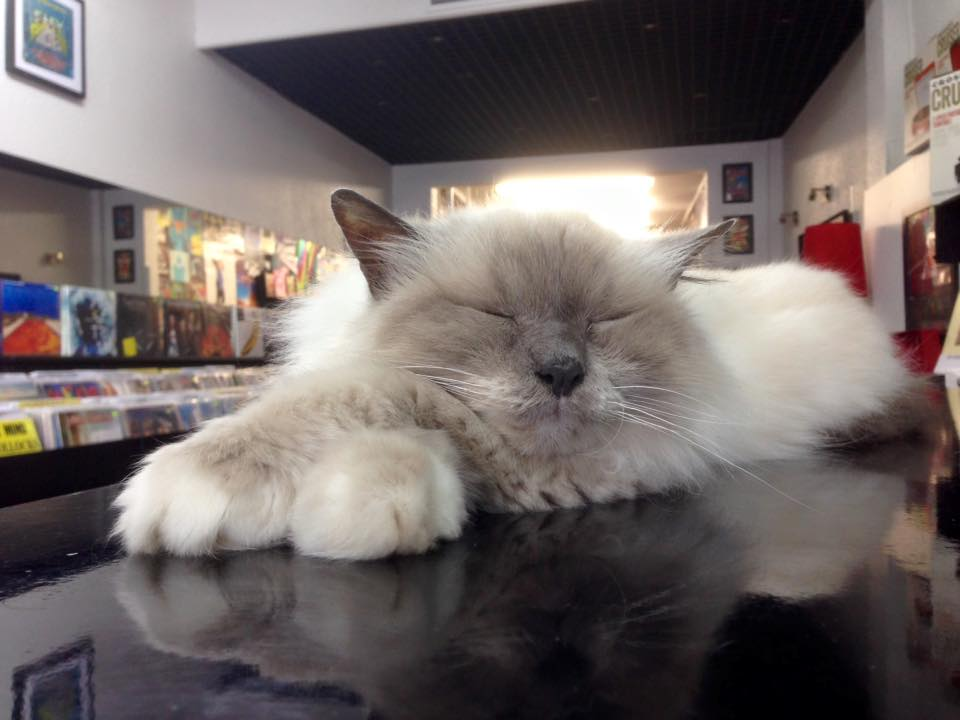 Record store fights to keep deaf cat behind the counter after customer complaints